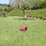 Zelenica z robotom